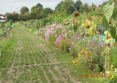 Smitham_Allotments_02