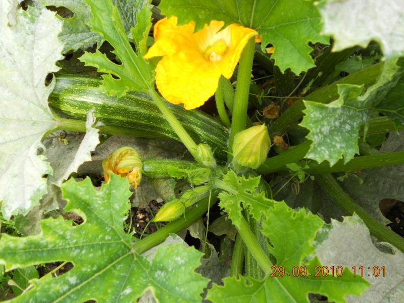Gardening Diary July