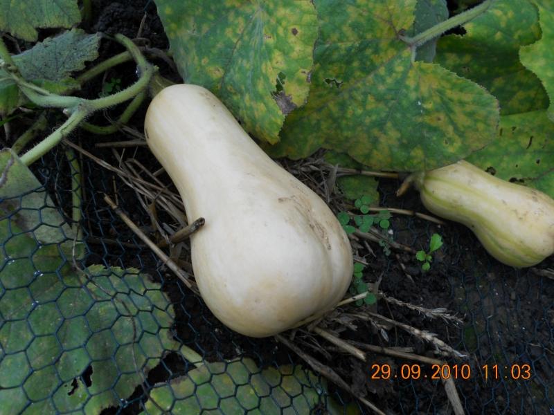Gardening Diary October