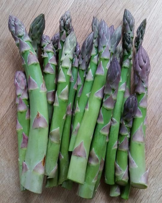 First harvest of asparagus 2019