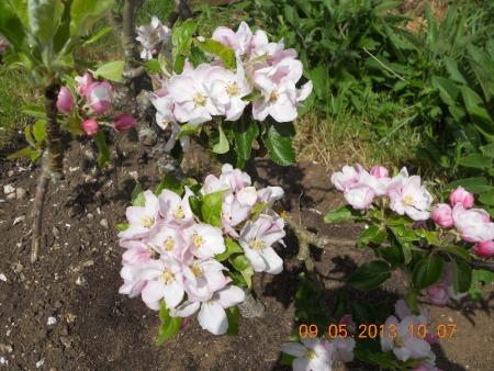 Gardening Diary May